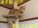 迷子猫コア君