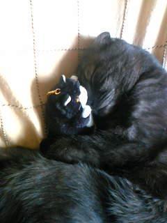 人形とうたた寝.jpg
