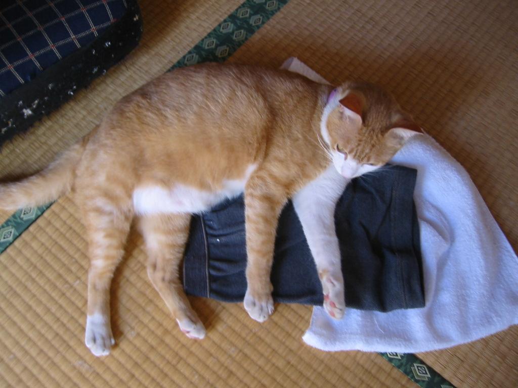 お兄ちゃんの洗濯物の上.jpg