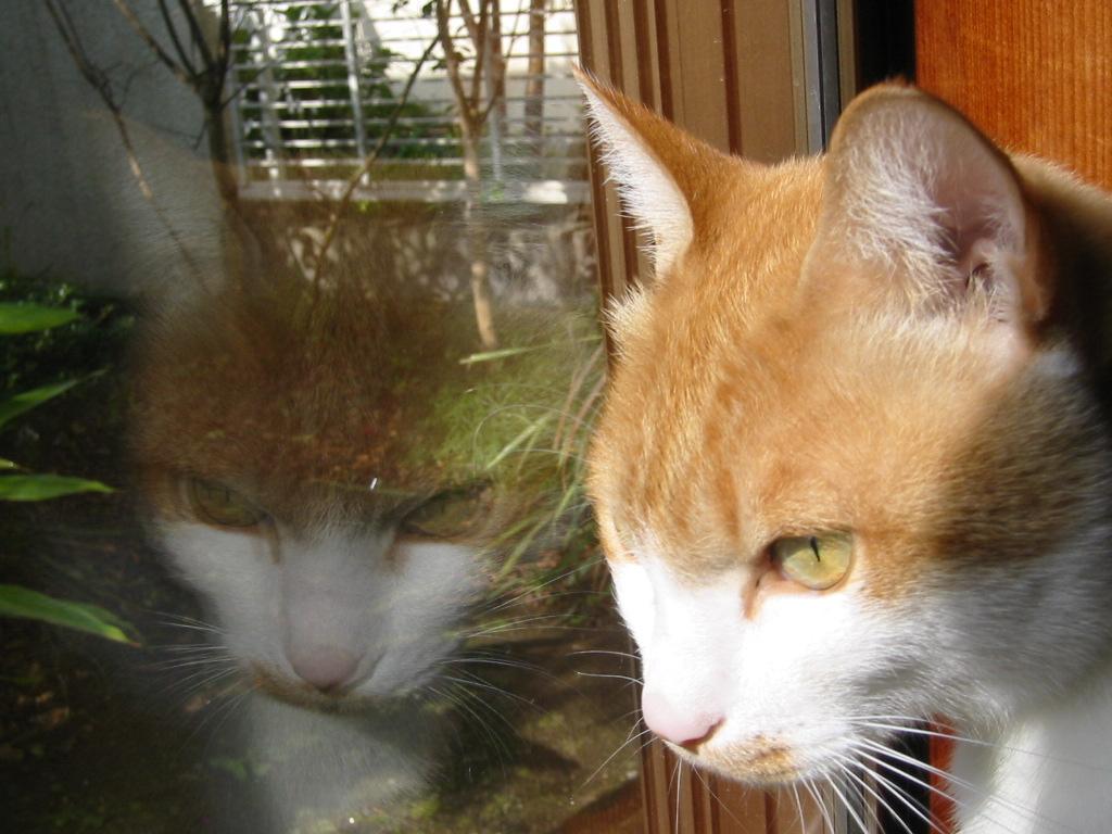 窓辺にて.jpg