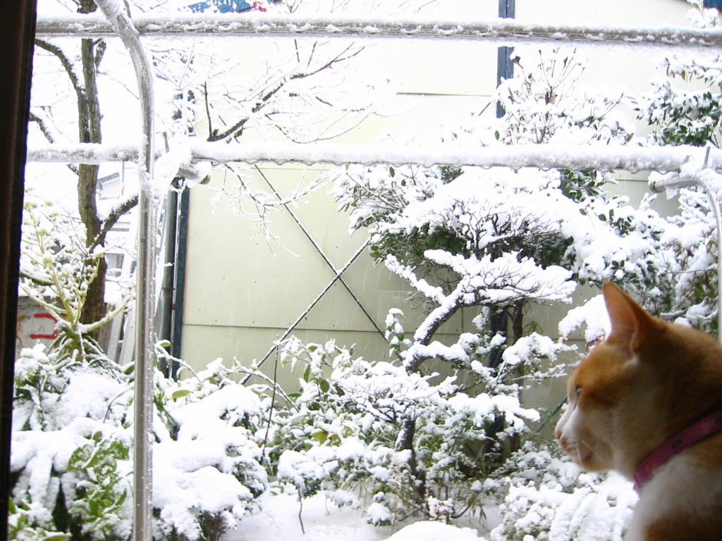 雪・横顔.jpg