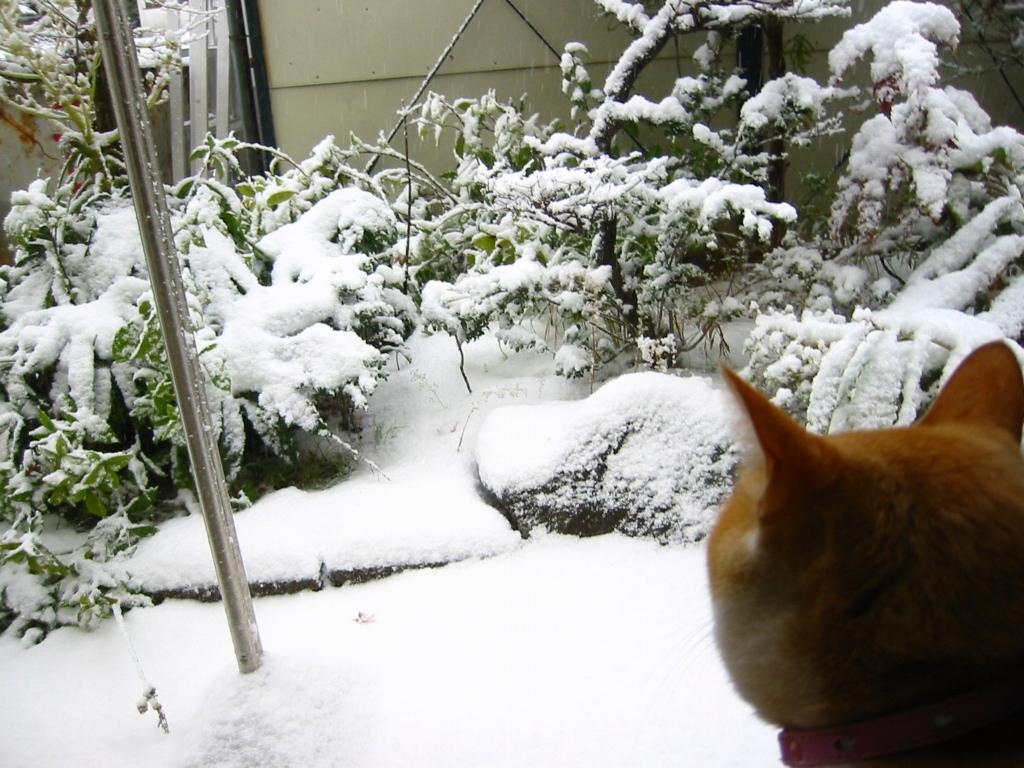 雪・後ろ向き.jpg