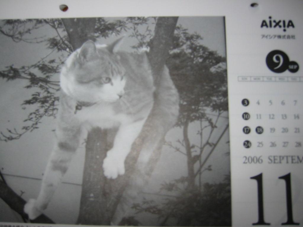 極楽猫カレンダー.jpg