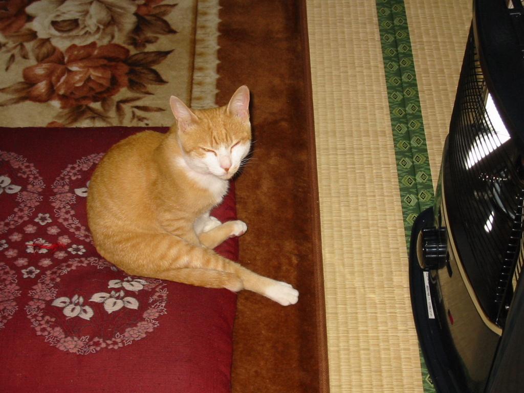 仔猫時代おっさん座り.jpg