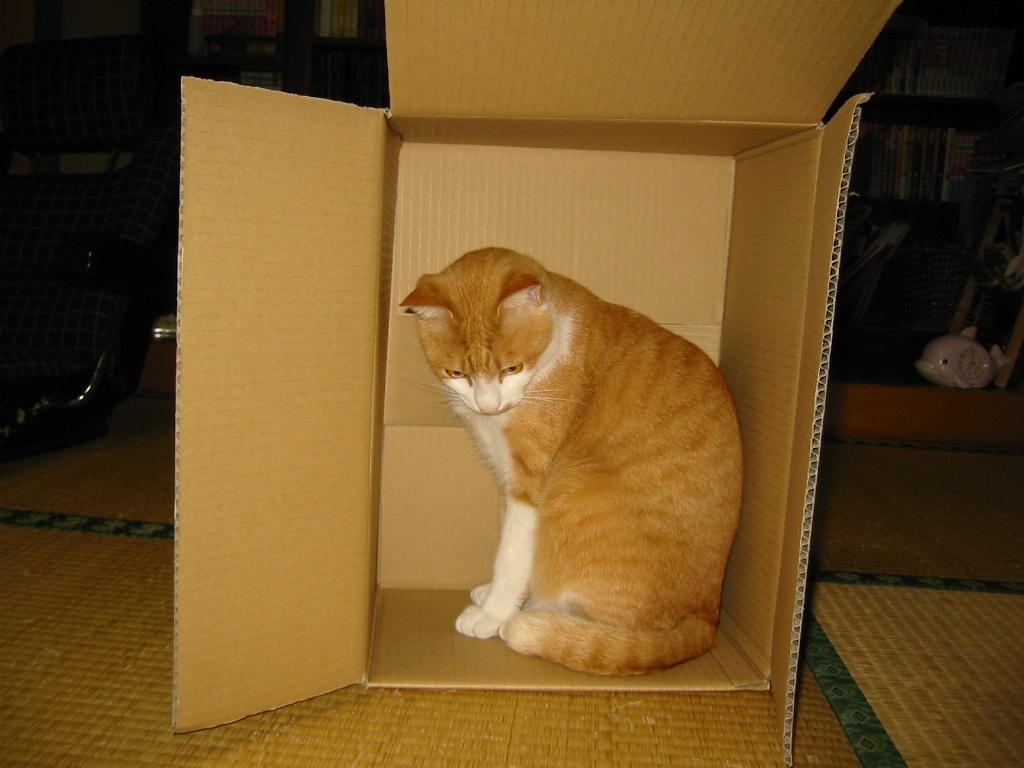 この箱でかいね.jpg