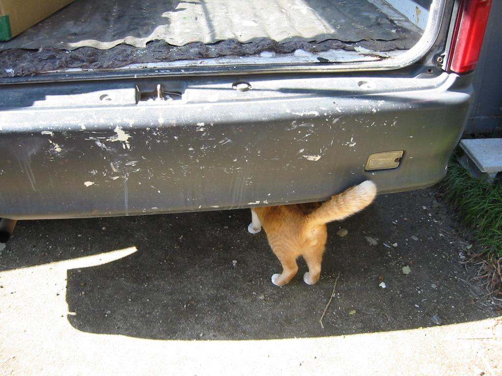 車の下へ.jpg