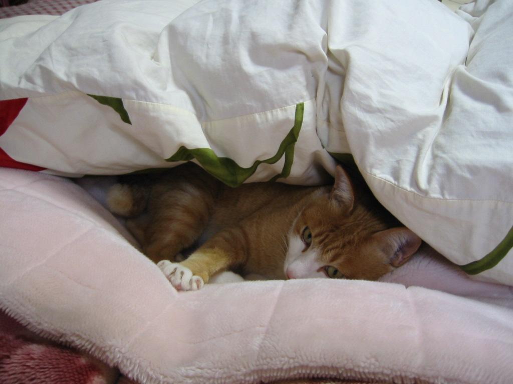 布団と毛布の間に2.jpg