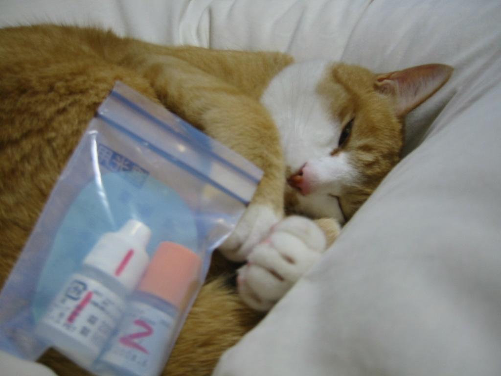 目薬・寝起き.jpg