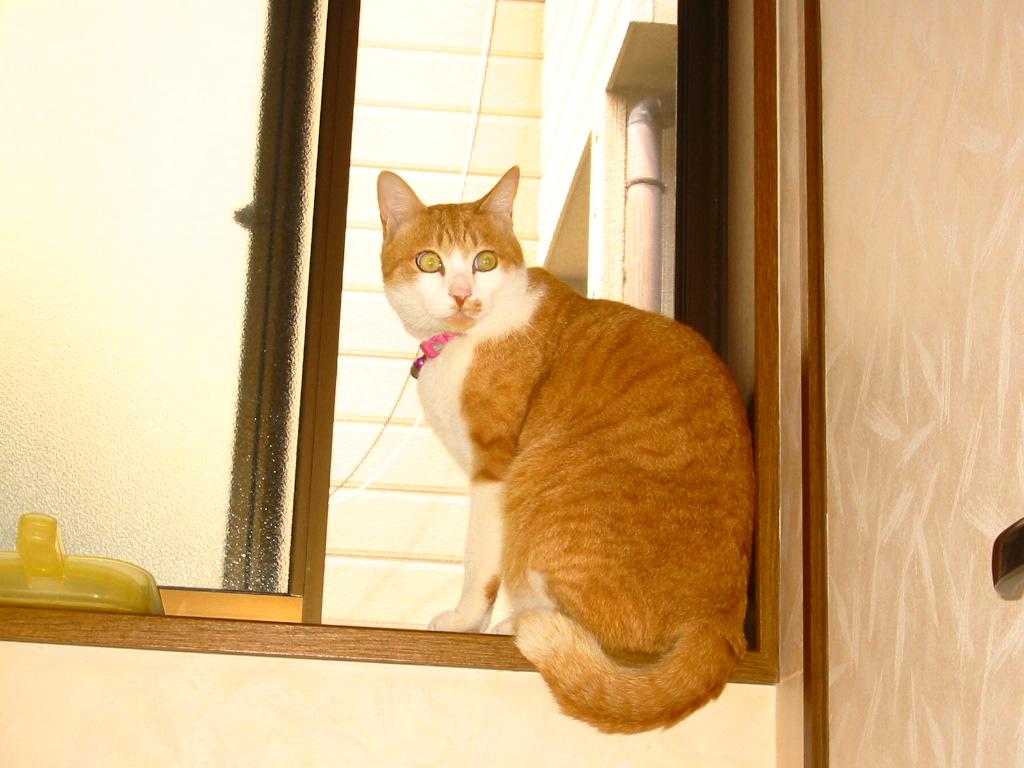 窓辺の王子.jpg