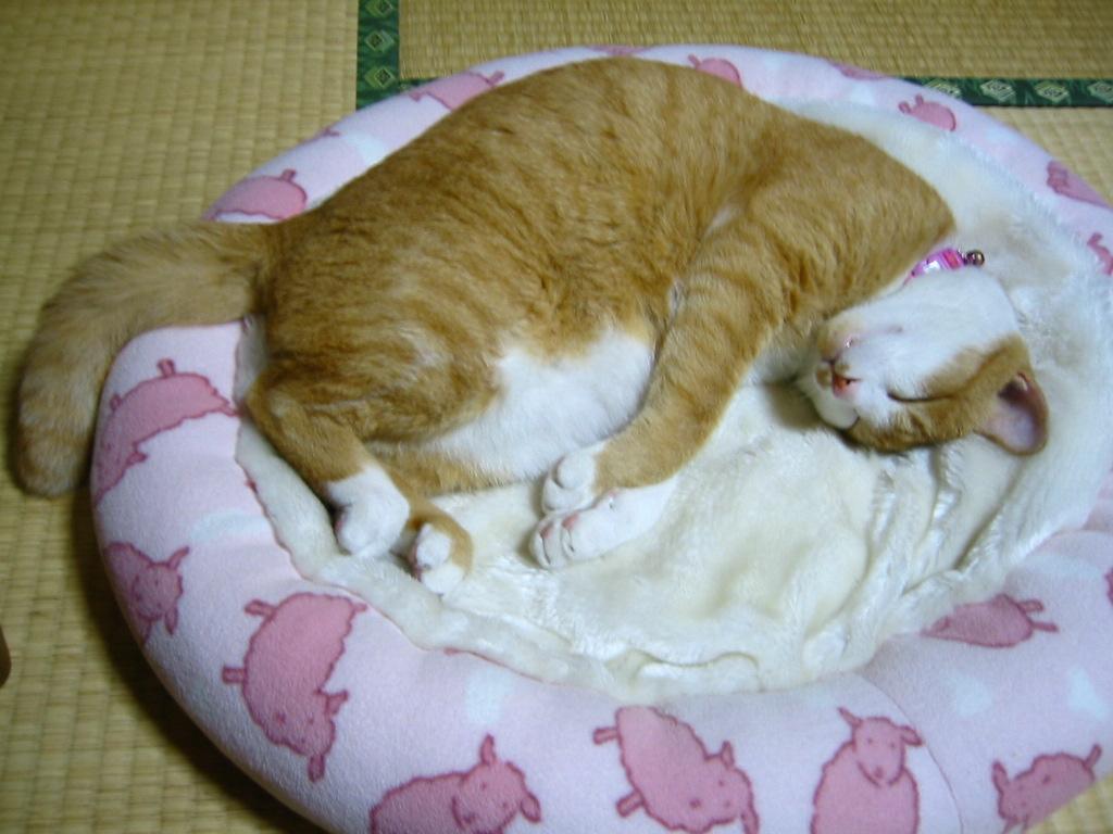 疲れてぐ〜ぐ〜.jpg