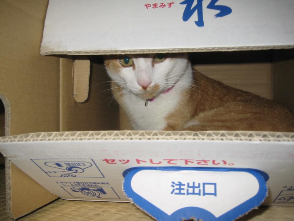 箱の中からじ〜っ・・・.jpg