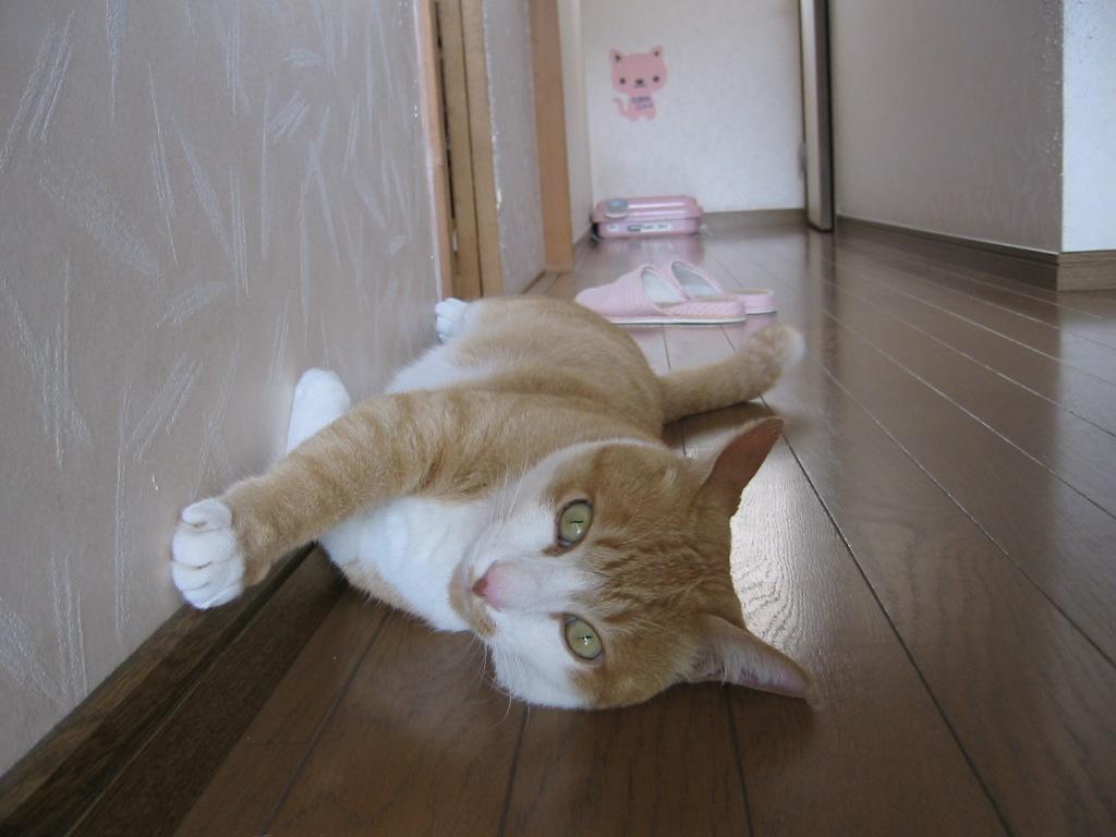 行き倒れ・廊下.jpg