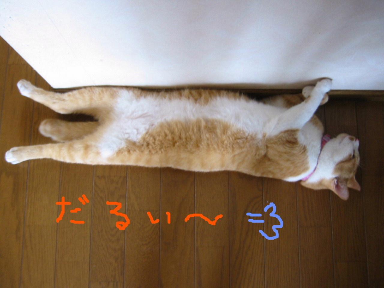 二度目の夏・腹.jpg