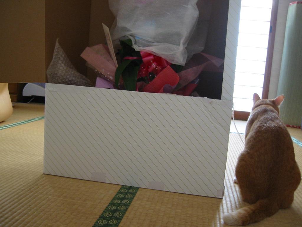 箱に入った花.jpg