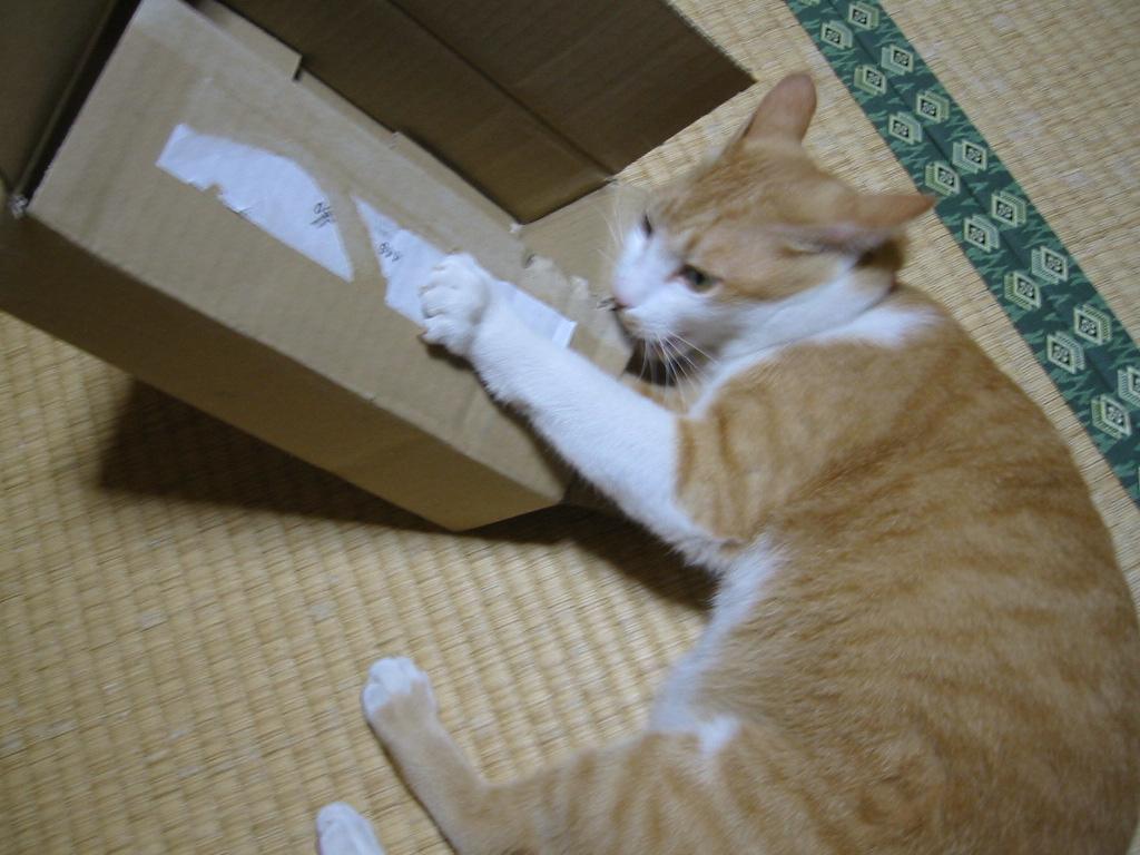箱をガジガジ.jpg
