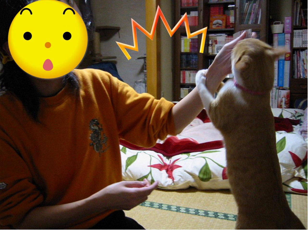 飼い猫に食われる2.jpg