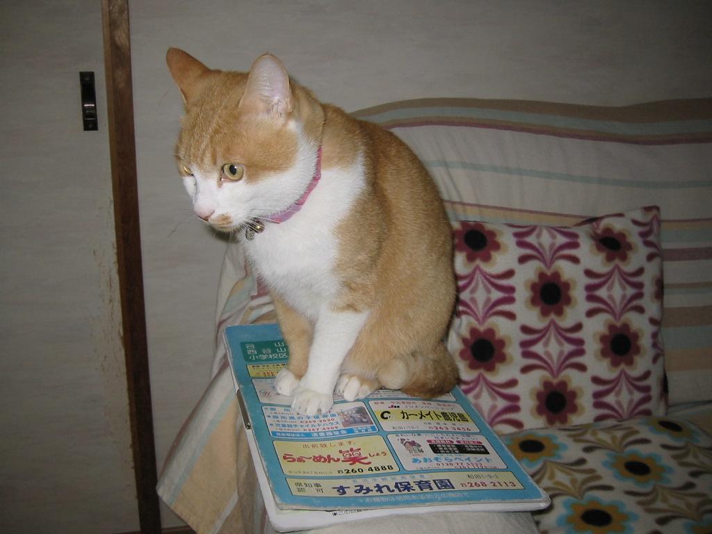 回覧板猫2.jpg