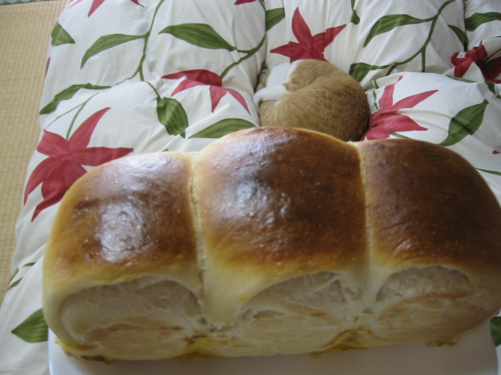 パンとしん.jpg