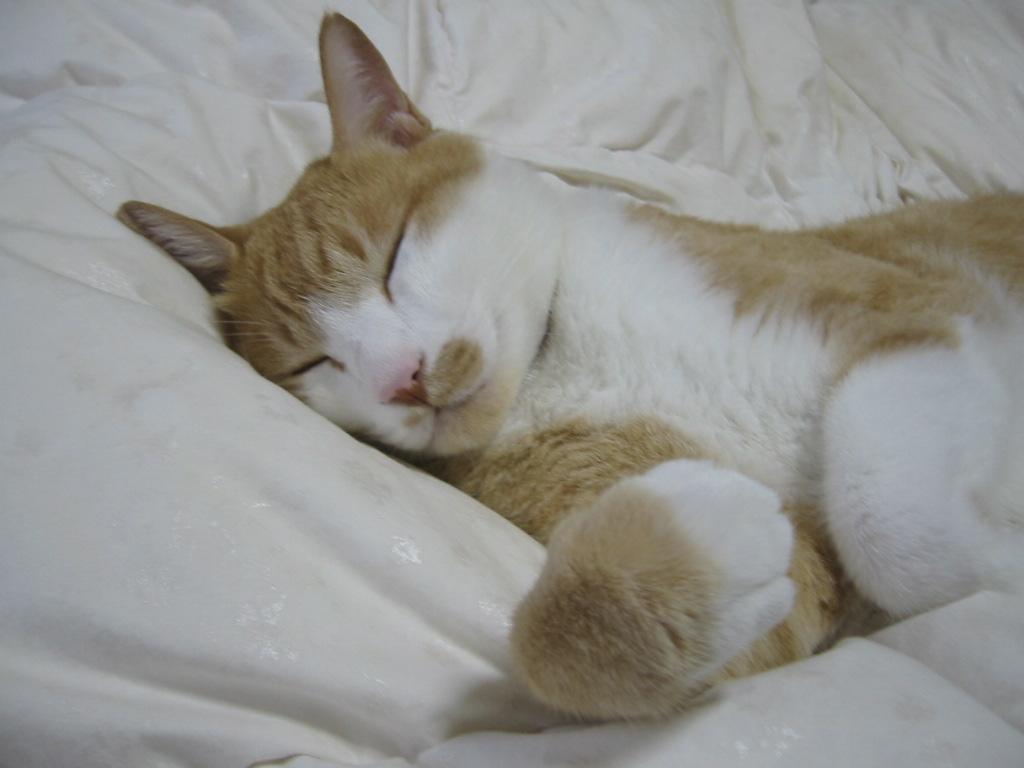 かわいい寝.jpg