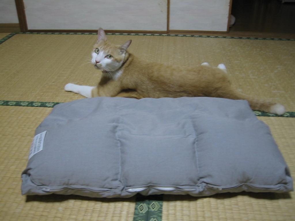MY枕2.jpg