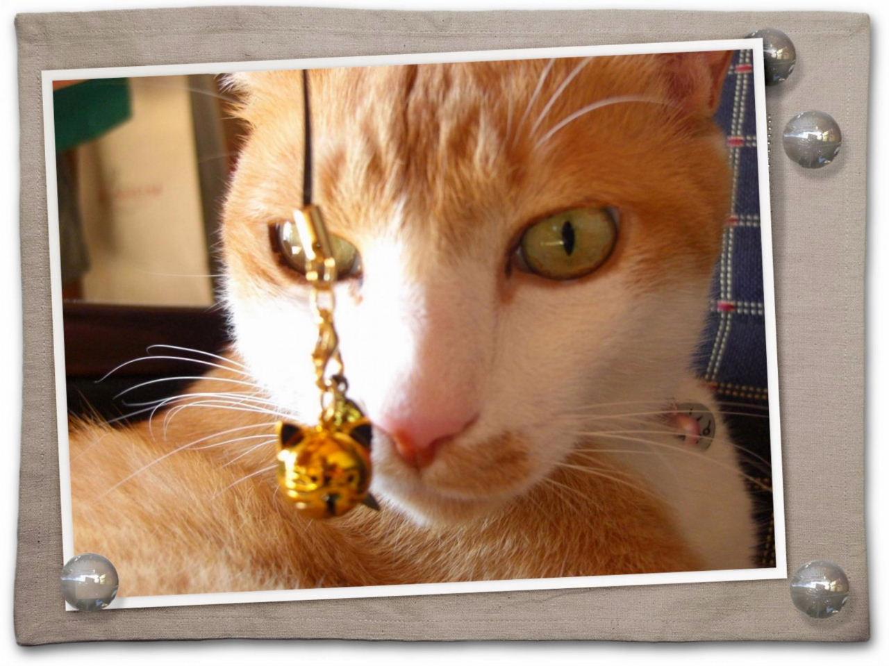 金猫ちゃん.jpg