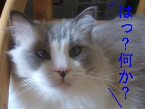 jusuke