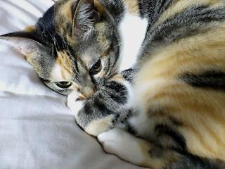 眠り猫2.jpg