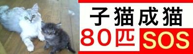 ●80匹SOS.jpg