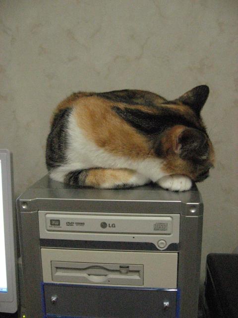 PCと風.jpg