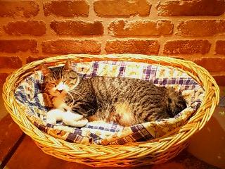 cats livin2.jpg