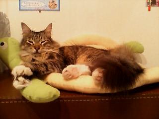cats livin3.jpg