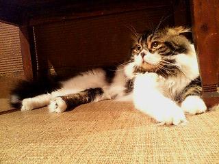 cats livin4.jpg