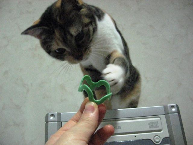 Cat Crazies3.jpg