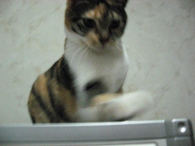 Cat Crazies4.jpg