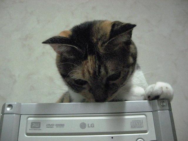 Cat Crazies5.jpg