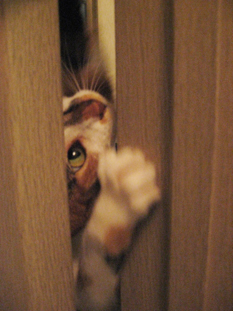 ドアの隙間4.jpg