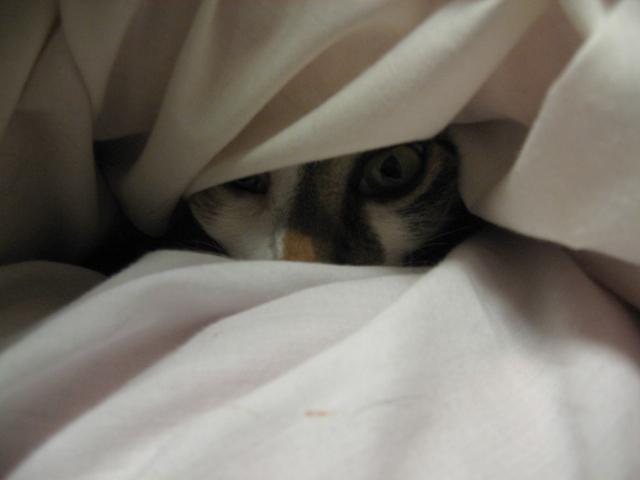 化け猫1.jpg
