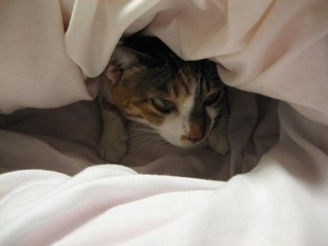化け猫2.jpg