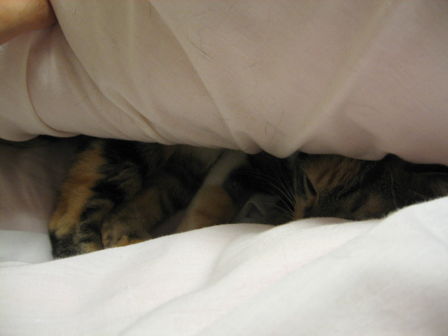 化け猫3.jpg