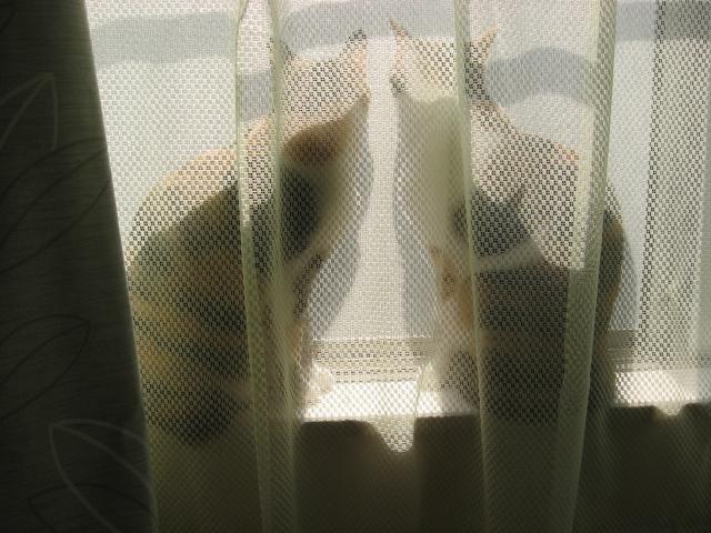 ひなたぼっこ1.jpg