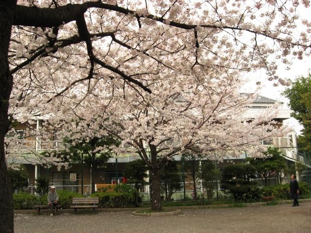 桜ふぶき3.jpg