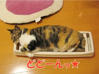 やっぱり枕好き.jpg