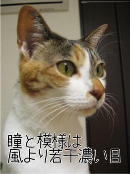 鈴.jpg