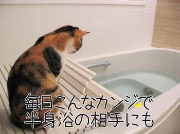 風呂のお供.jpg
