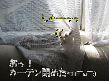 暑くないの?.jpg