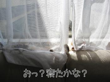 続・暑くないの?.jpg