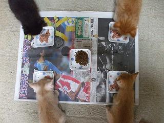 KAZUさんちの子猫たち.jpg