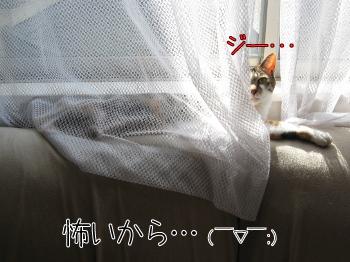 三毛とサビ.jpg