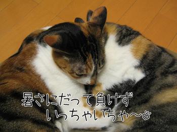 初夏らしく.jpg