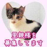 ◆わらひよ日記へGO◆.jpg